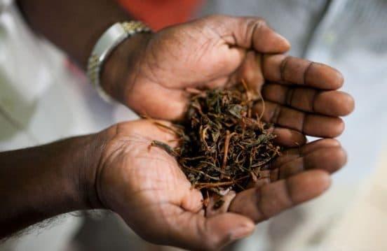 Цейлонский чай, Шри Ланка турфирма You Travel (Витебск)2