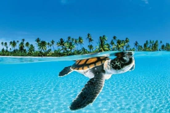 Круиз Куба и Карибские острова - купить круиз по Карибам в Витебске (турагентство You Travel)